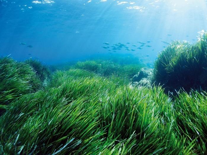 Как растут морские водоросли? Виды морских водорослей