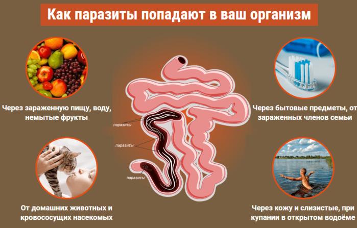 Состав эликсира Депаразит от паразитов/6210208_propolisnyj_eliksir_deparazit_1_ (700x447, 240Kb)