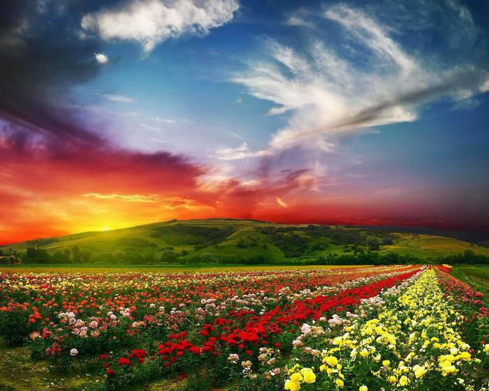 samye-cvetochnye-doliny-mira-3 (700x560, 68Kb)