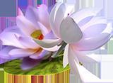 0_7c834_a259f81c_L---1-160СЂС… (160x117, 36Kb)