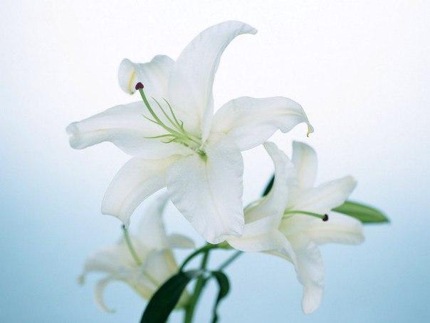 любовь, мечта, весна 13 (604x453, 114Kb)