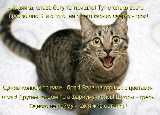 image (548x395, 47Kb)