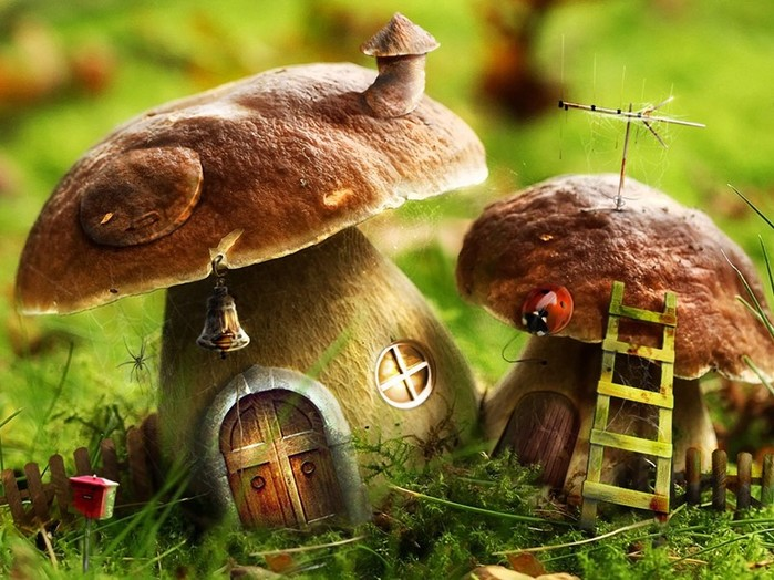 Что такое грибы? Виды грибов