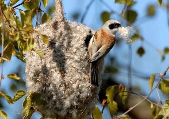 Зачем птице гнездо? Факты о птичьих гнездах