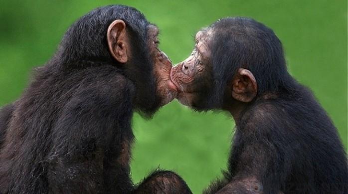 Откуда пошла привычка целоваться?