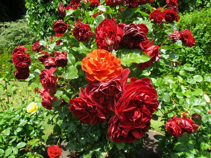 Ботанический сад в Крайстчерче, Новая Зеландия