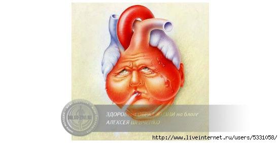сердечная астма (552x281, 54Kb)