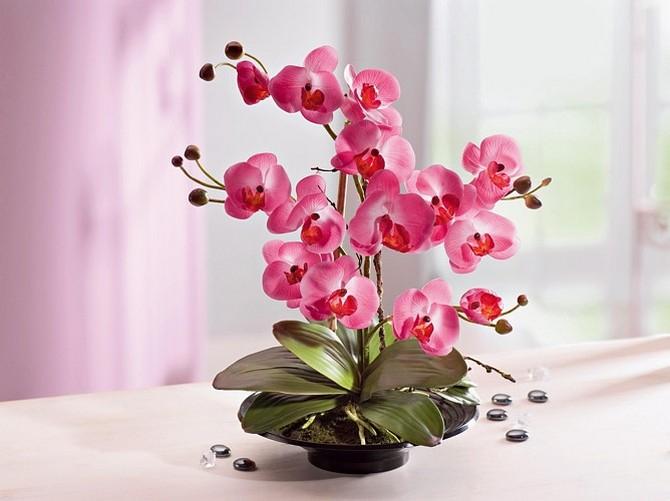 orhidea_cvetok (670x501, 209Kb)