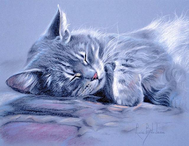 1390416122_lucie-bilodeau-cats-37 (640x497, 326Kb)