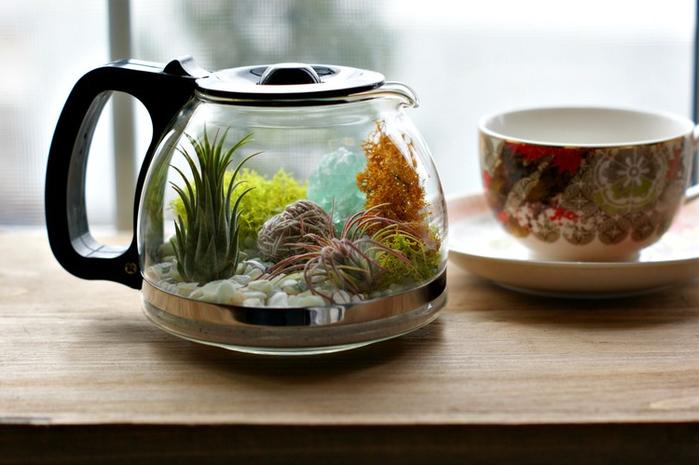 Plants+and+Coffee+--+Let's+make+a+coffee+pot+terrarium (3) (700x465, 285Kb)
