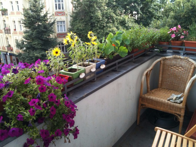Berlin_balcony_with_flowers-e1432499910491 (668x501, 381Kb)