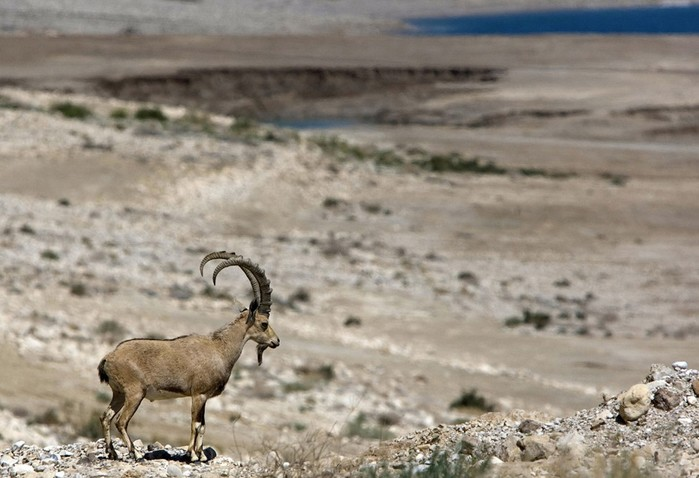 Загадки и тайны Мертвого моря