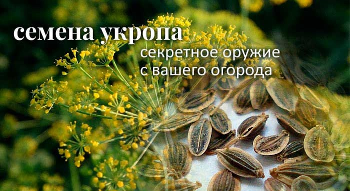 3925311_semena_ykropa (700x383, 108Kb)