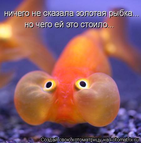 золотая рыбка (450x457, 169Kb)