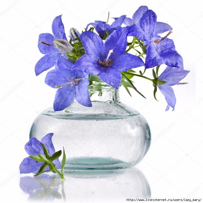 depositphotos_21190977-stock-photo-bouquet-bunch-of-blue-campanula (700x700, 271Kb)