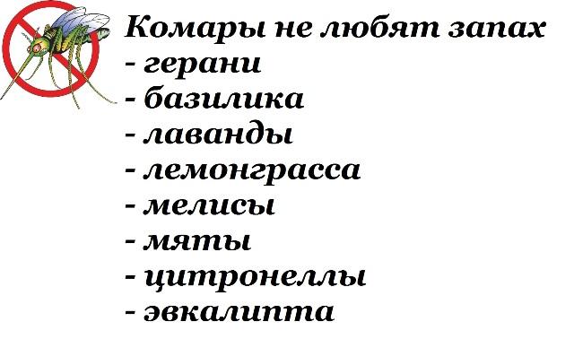 3368205_kakvybratehffektivnoeibezopasnoesredstvootkomarov1 (640x378, 65Kb)