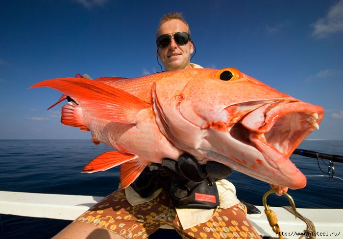 рыбалка на мальдивах/3925073_Maldivesfishingflickr_comNicolaZingarelli (700x489, 202Kb)
