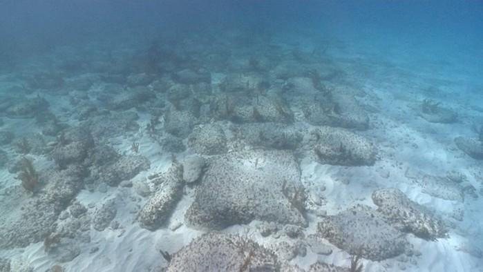 Удивительные и невероятные факты об океане