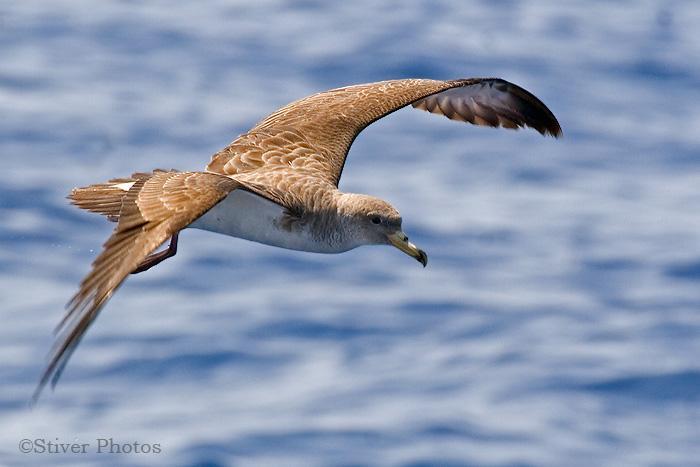 «Оседлые» птицы не означают, что суша близко