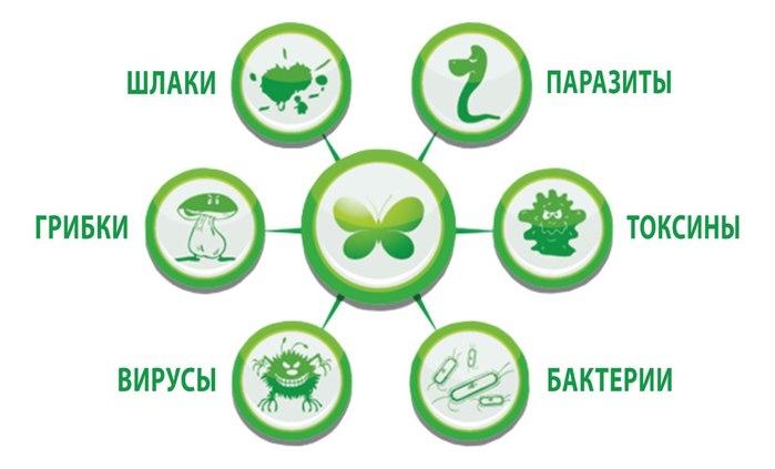 Алексеев очищение организма