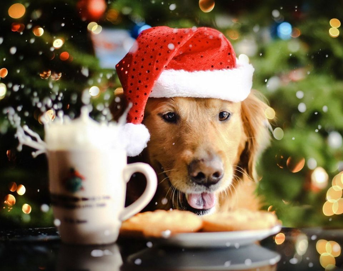 christmas-dog-wallpaper-960x759 (700x553, 362Kb)