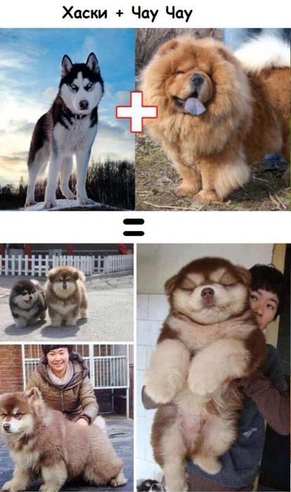 Результат любви собак разных пород! Фотографии гибридов