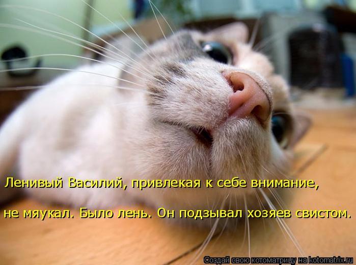 kotomatritsa_J (700x522, 346Kb)