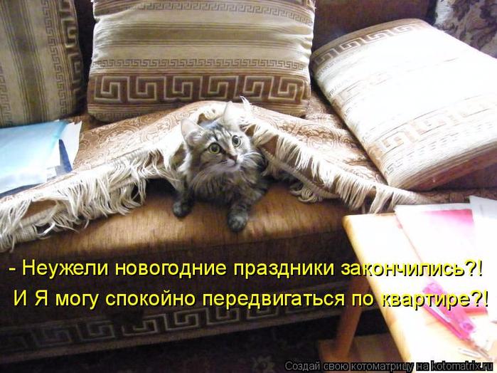 kotomatritsa_jL (700x524, 423Kb)