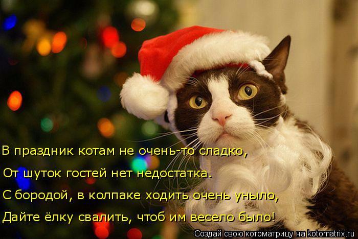 kotomatritsa_o0 (700x468, 295Kb)