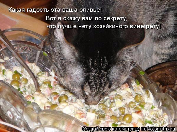 kotomatritsa_QF (600x450, 238Kb)