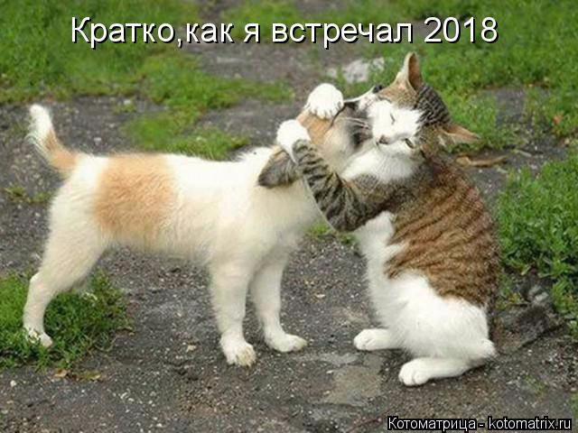 kotomatritsa_t (640x480, 215Kb)