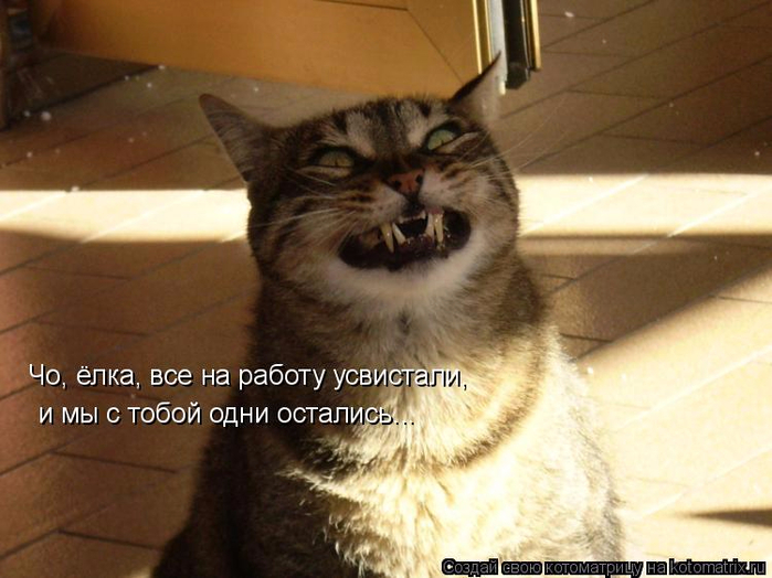 kotomatritsa_U (700x524, 338Kb)