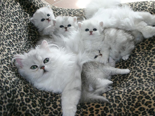 proud-cat-mommies-361__605 (605x454, 215Kb)