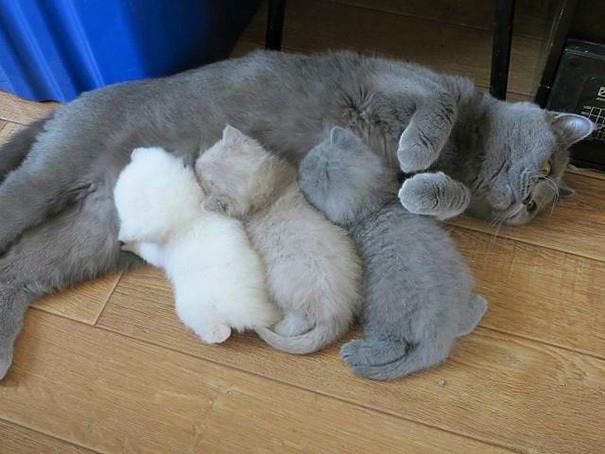proud-cat-mommies-351__605 (605x454, 190Kb)