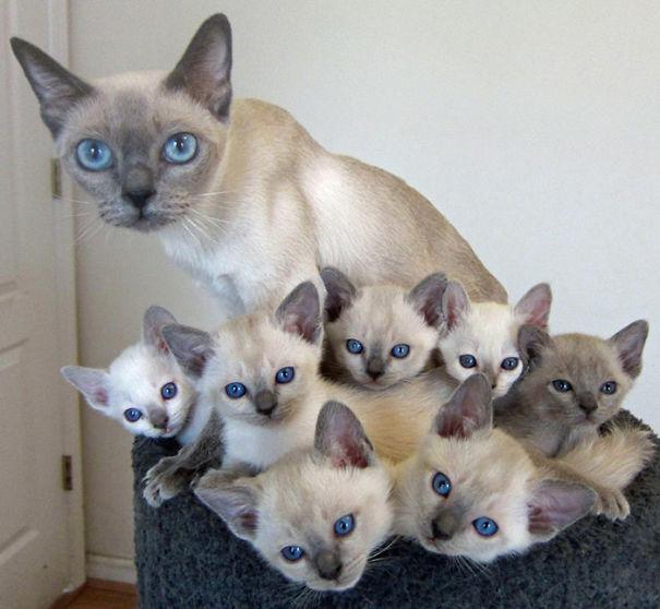 proud-cat-mommies-231__605 (605x558, 148Kb)