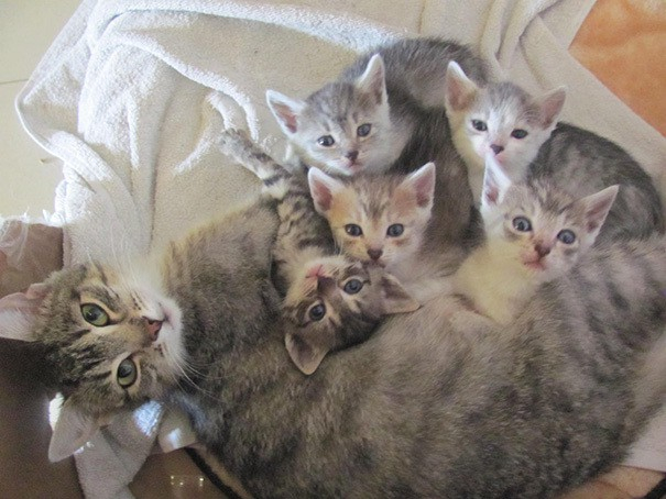proud-cat-mommies-31__605 (605x454, 202Kb)