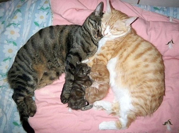 proud-cat-mommies-49__605 (605x448, 189Kb)