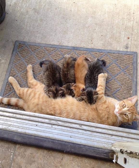 proud-cat-mommies-24__605 (578x700, 483Kb)