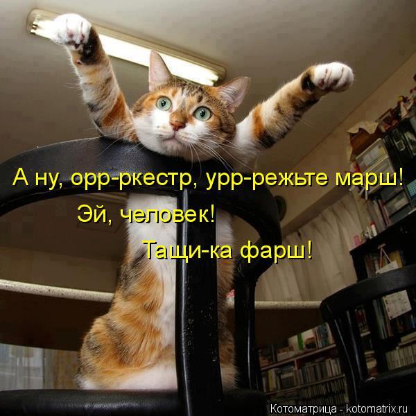 kotomatritsa_9 (600x600, 239Kb)
