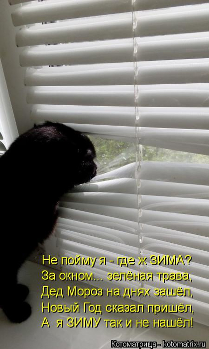 kotomatritsa_f9 (420x700, 241Kb)