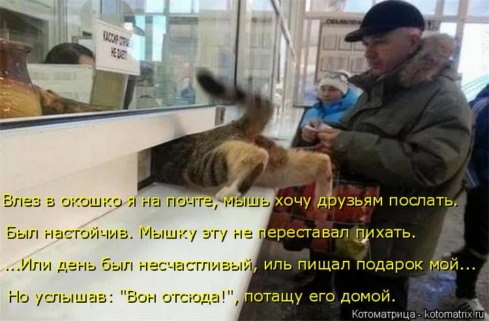 kotomatritsa_G (2) (700x459, 331Kb)