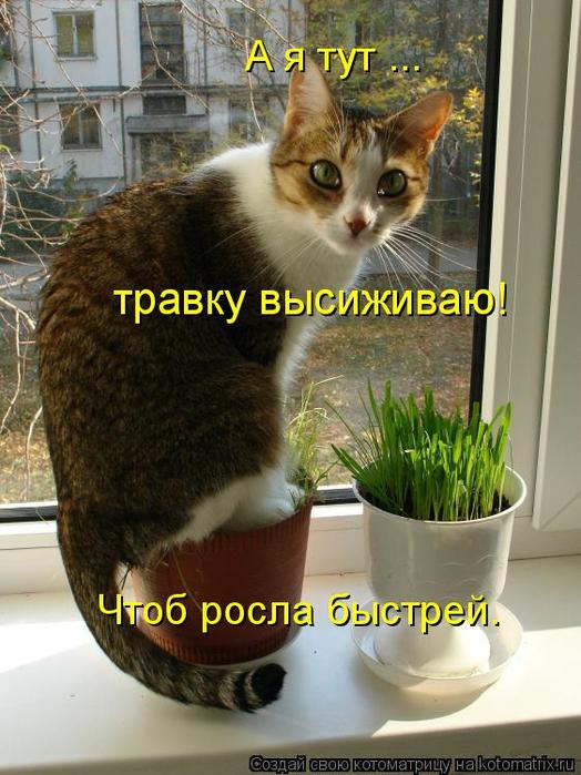 kotomatritsa_I (524x700, 393Kb)