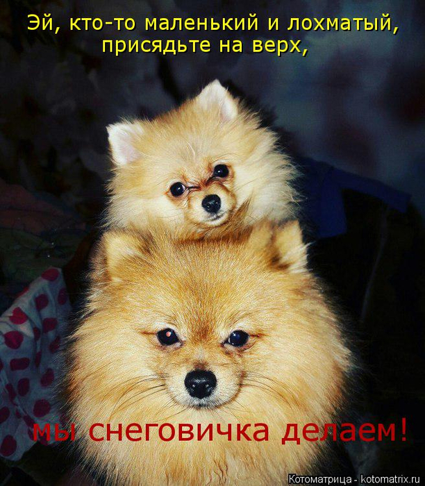 kotomatritsa_L (2) (612x700, 486Kb)