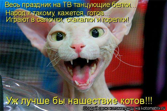 kotomatritsa_m (1) (640x427, 286Kb)
