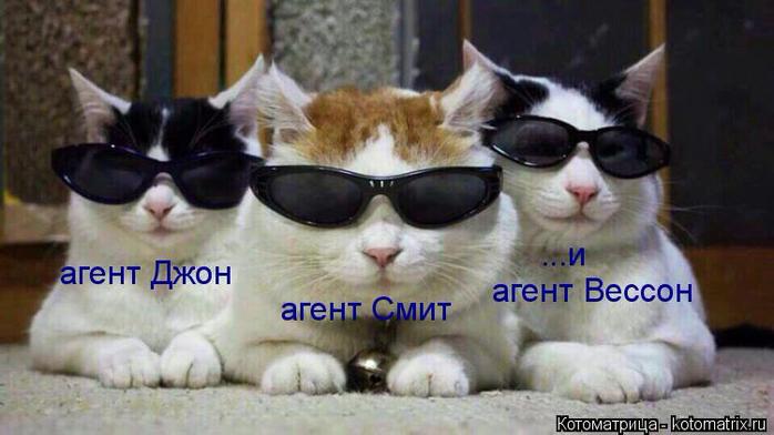 kotomatritsa_Q (3) (700x392, 255Kb)