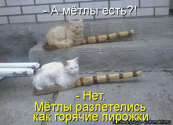 kotomatritsa_Q (604x437, 227Kb)