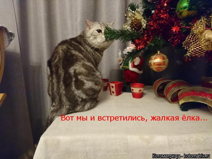 kotomatritsa_U (700x524, 329Kb)