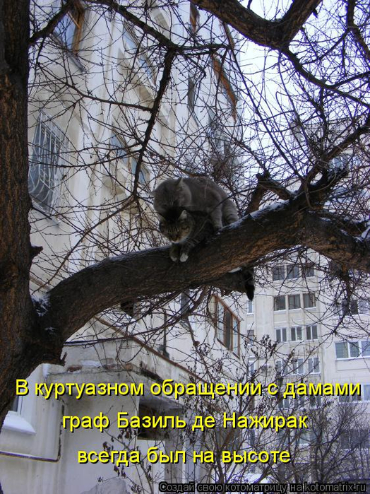 kotomatritsa_W (1) (524x700, 519Kb)