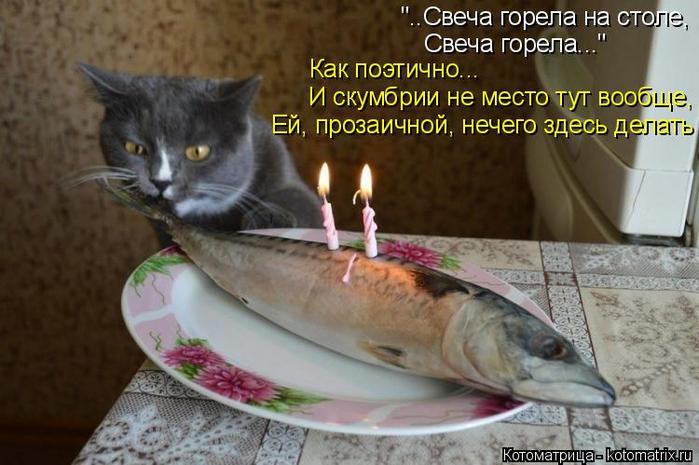 kotomatritsa_x (700x465, 321Kb)