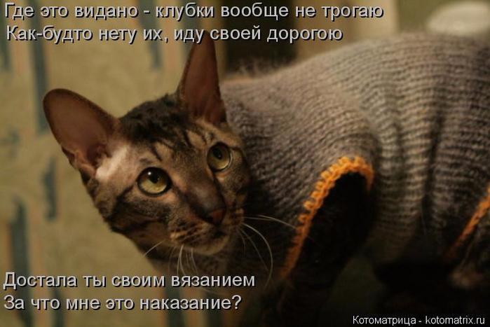 kotomatritsa_3 (700x467, 295Kb)